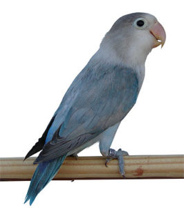E' un uccello molto bello ha dei colori magnifici.