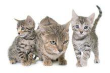 Famiglia di gattini