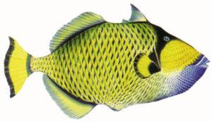E' un pesce a forma di balestra da dove prende il nome