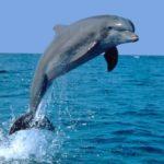 Delfino che salta dall'acqua