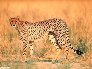E' l'animale più veloce l mondo