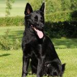 cane di colore nero