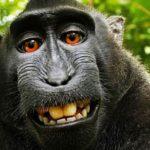 foto di un macaco nella giungla