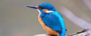 volatile di colore arancione azzurro