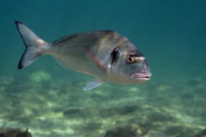 pesce di grandi dimensioni
