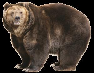 L'orso è un ottimo arrampicatore