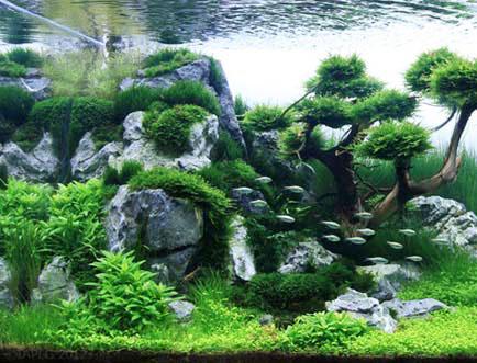 acquario comunità