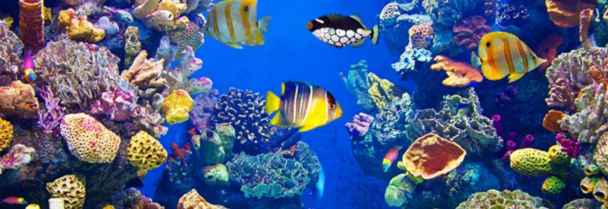 Libri acquario acqua dolce e marino