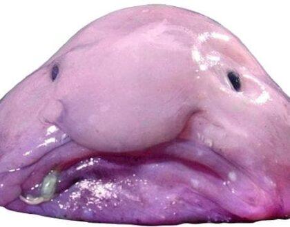 5 pesci stranissimi nel mondo