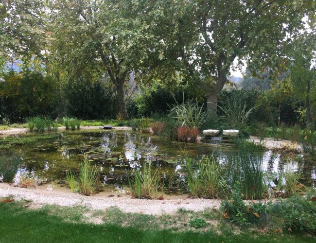 Come realizzare un Laghetto in giardino | La guida di Petingros