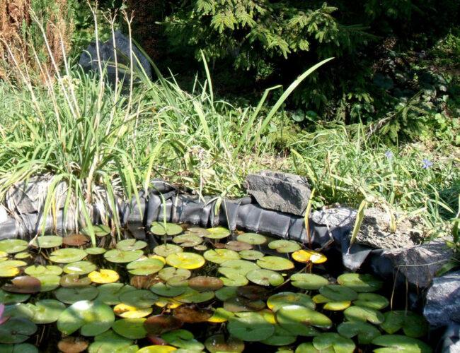 Alghe nel laghetto rimedi e prevenzione
