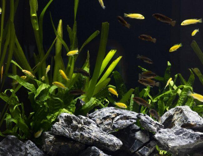 Come Gestire le Piante in acquario