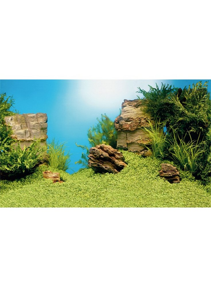 Royalty free sfondo per acquario esterno sfondo italiano for Arredo acquario acqua dolce