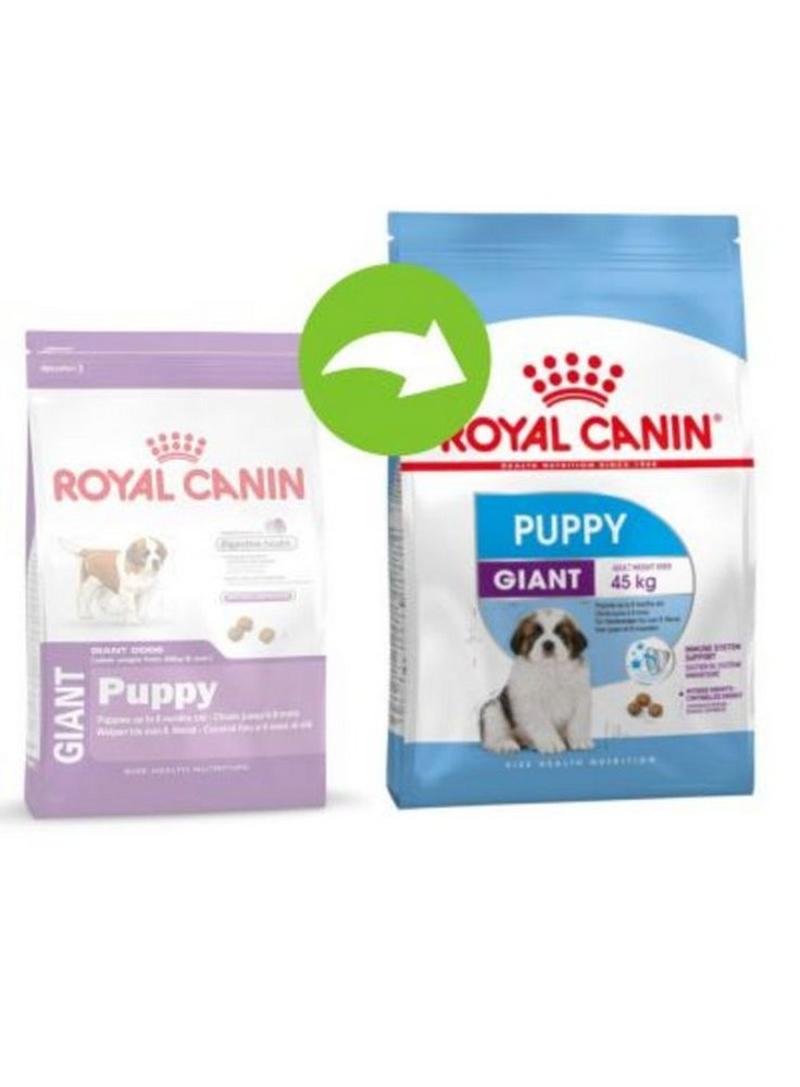 11144622_12122202_rc_giant_puppy