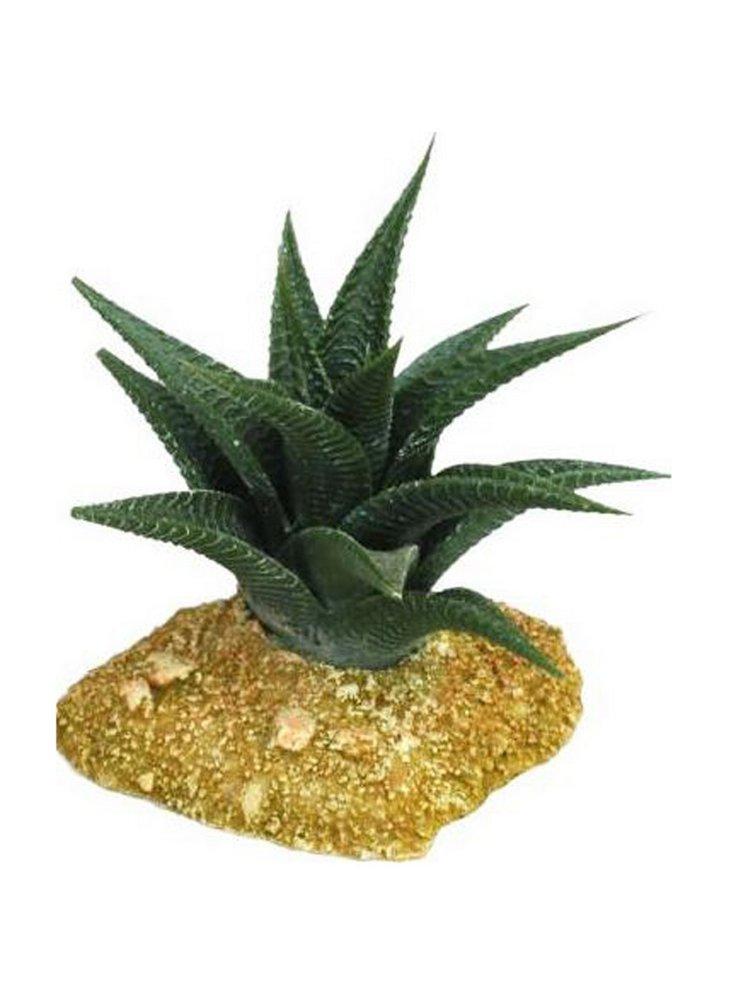 Haquoss decorazione cactus 6