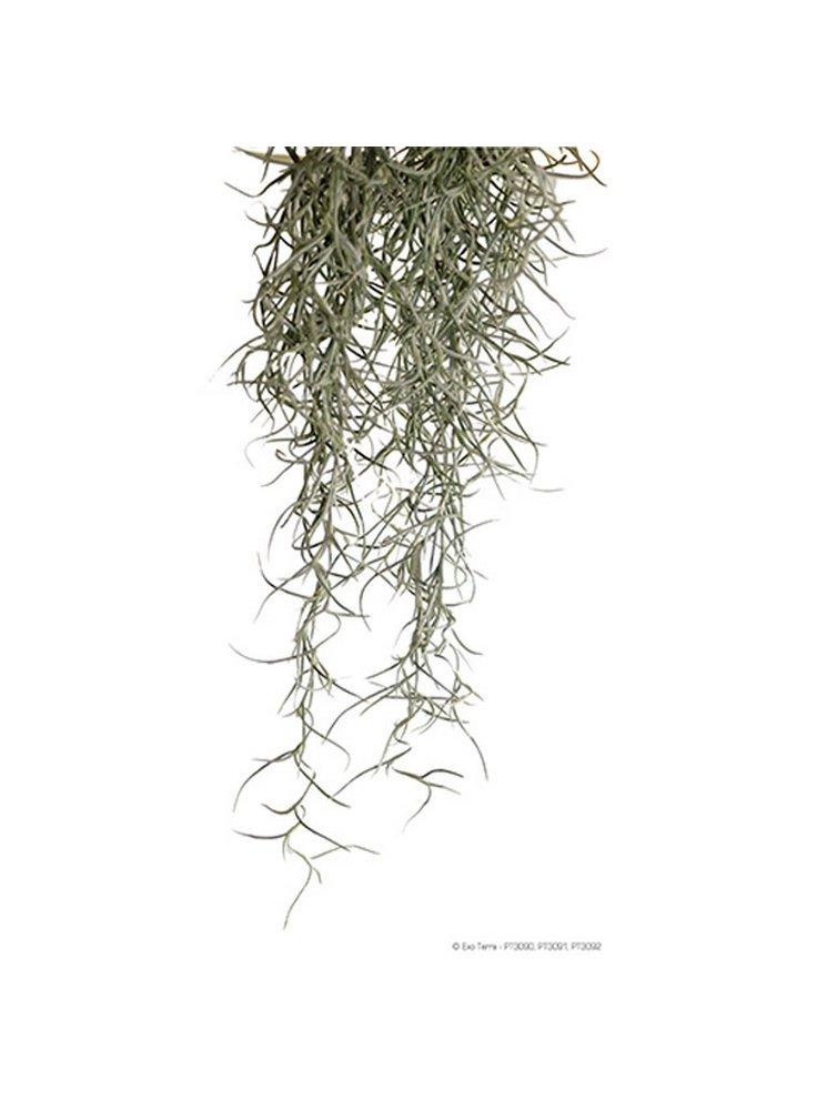 Pianta exoterra plant spanish moss small