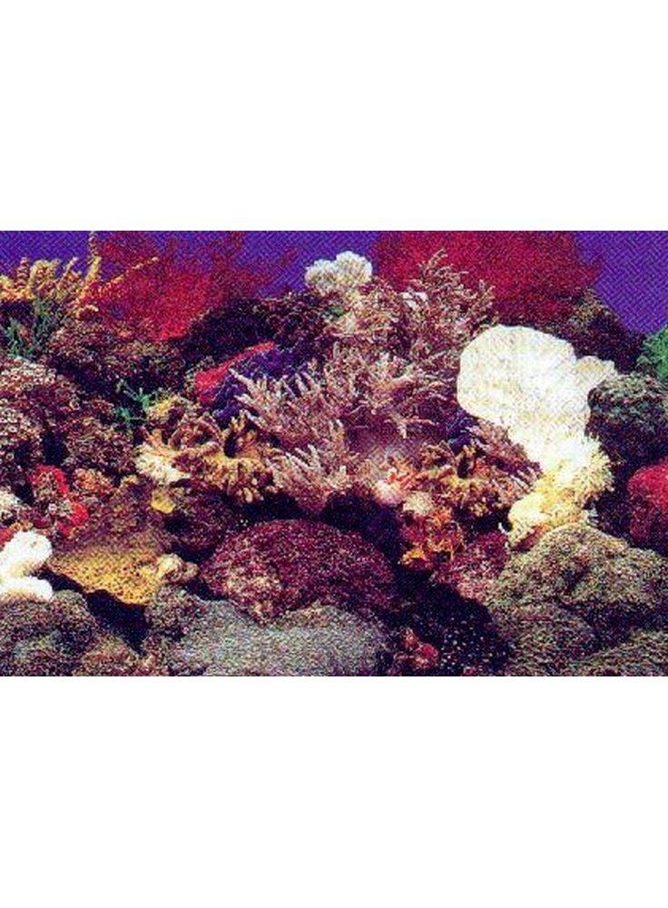 Sfondo marino decorativo per acquario marino trixie for Sfondi per acquari