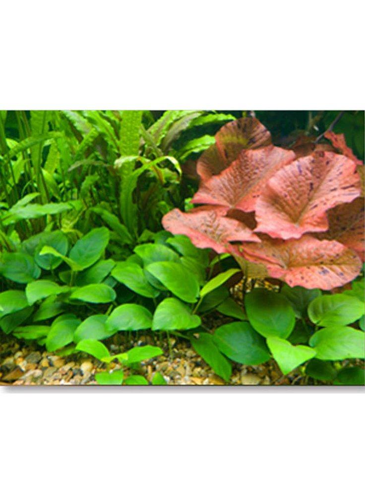 Assortimento biotopo amazzonico set da 90 a 120 litri 15 piante