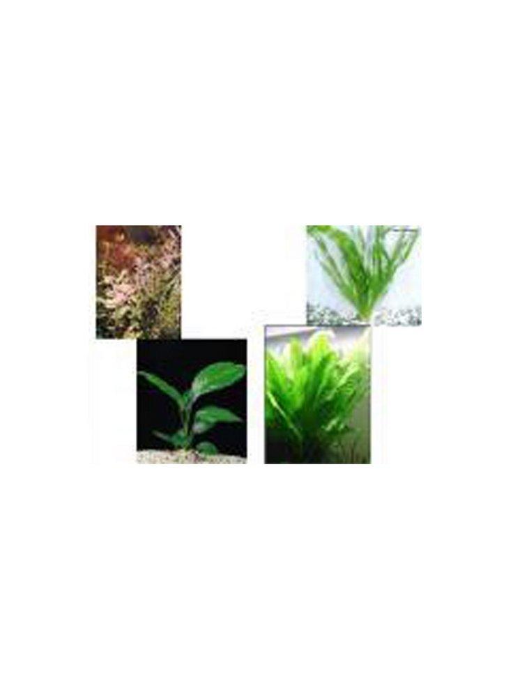 Assortimento 3 piante alte temperature biotopo discus