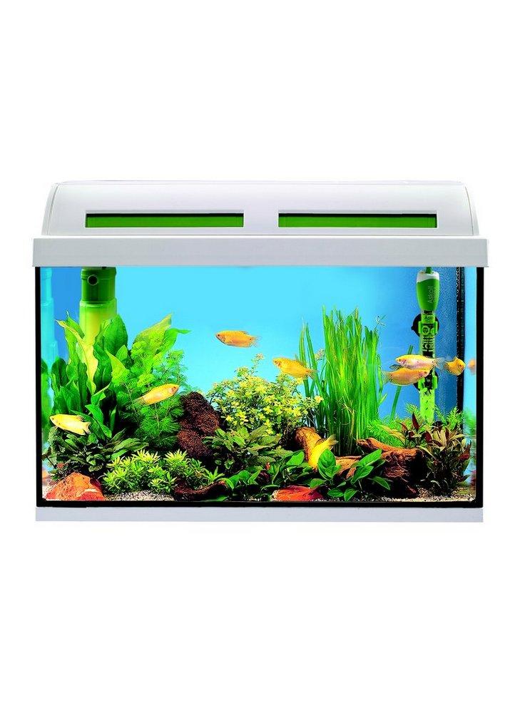 Acquario ambiente m 60x30 bianco askoll for Acquario 100 litri prezzo
