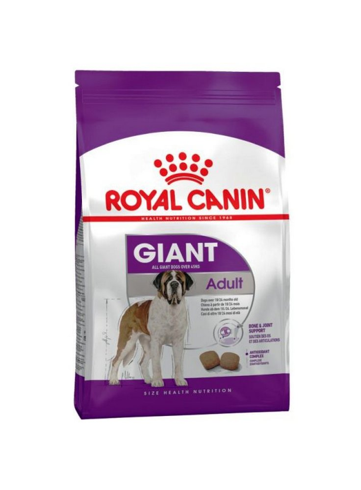 27071707_royal-giant-adult
