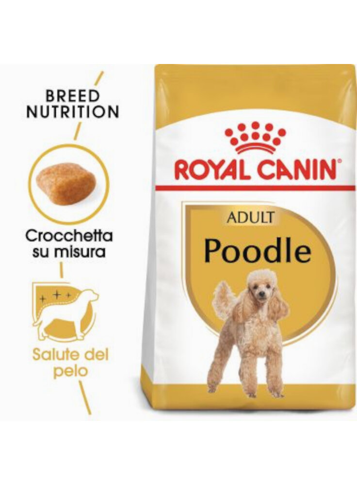 Barboncino POODLE Adult Royal Canin