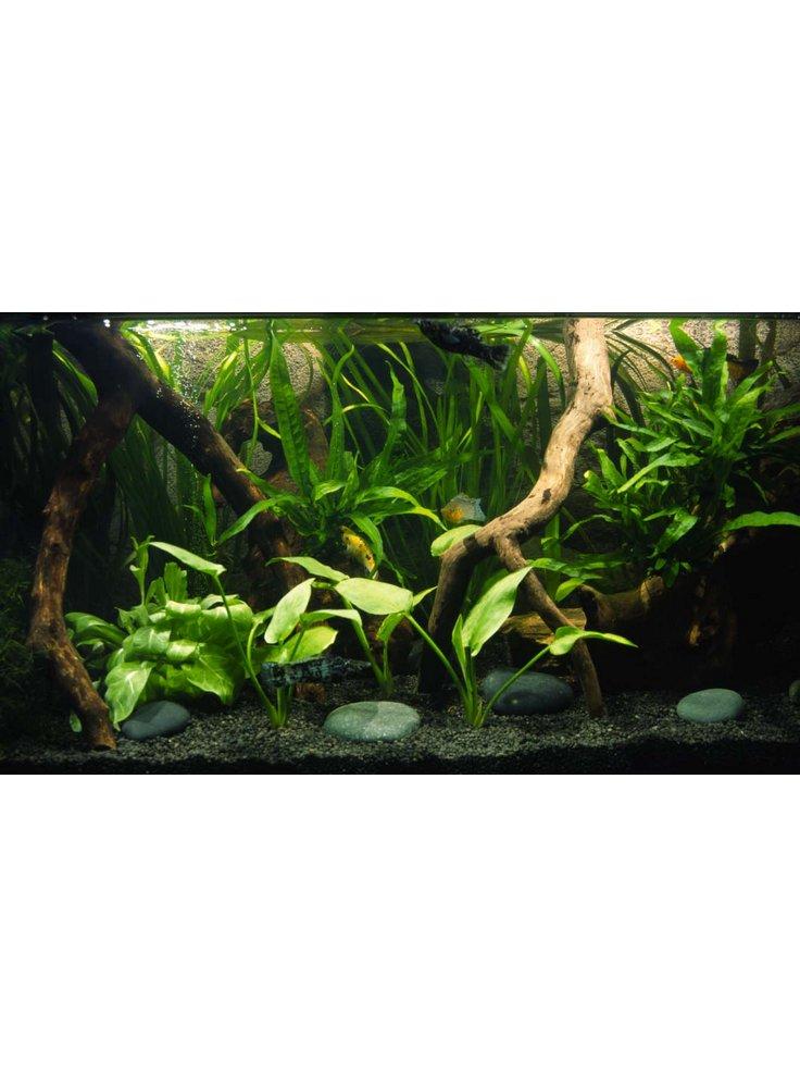 allestimento acquario askoll ambiente dolce tropicale petingros - Allestimento Acquario Dolce Con Piante Vere