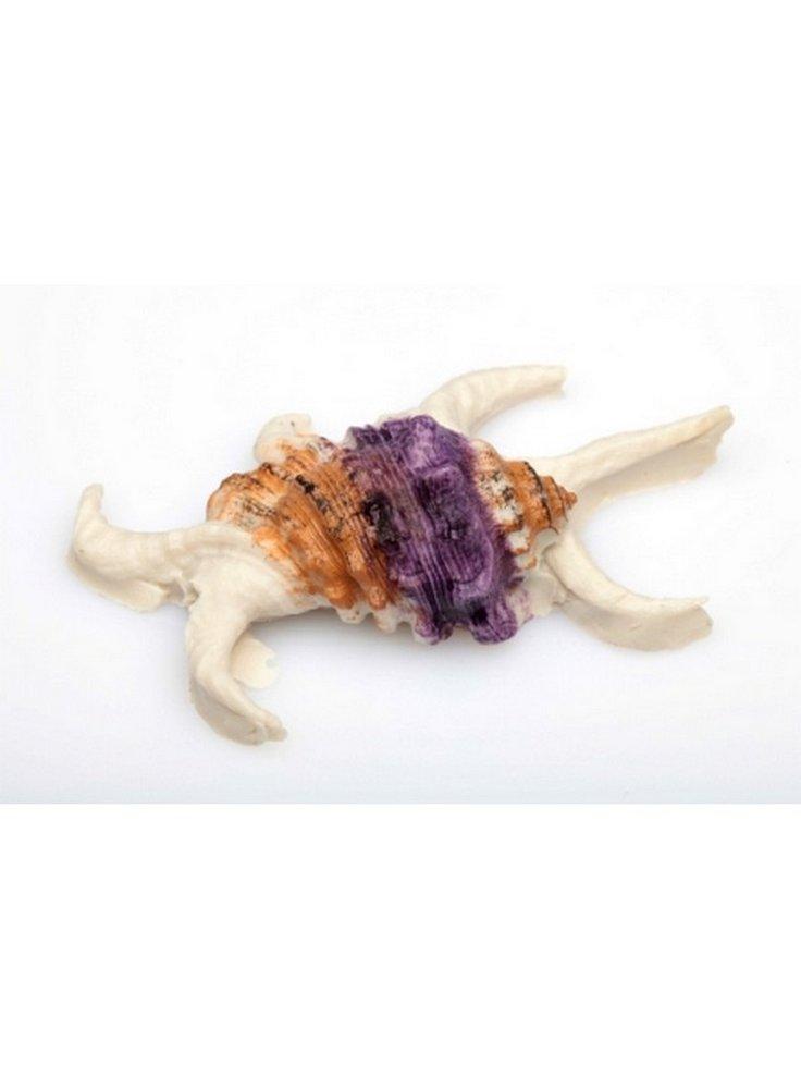 Decorazione conchiglia mollusco su roccia