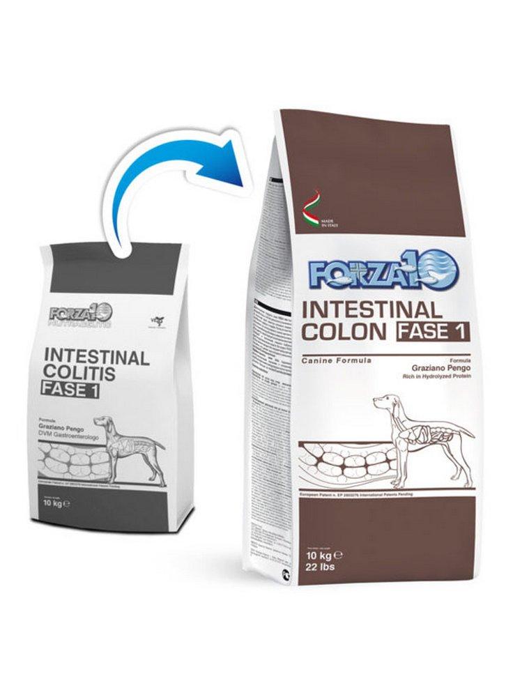 17124533_Intestinal-colon