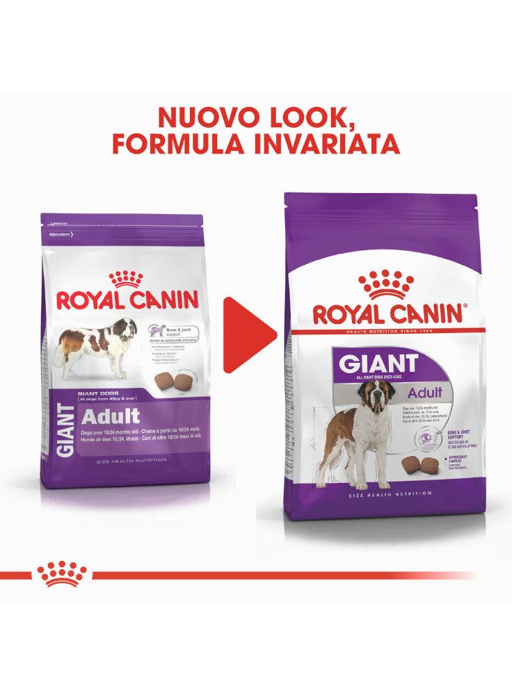 giant-adult-cane-royal-canin-3