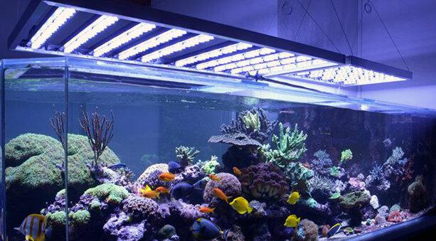 Illuminazione per acquari