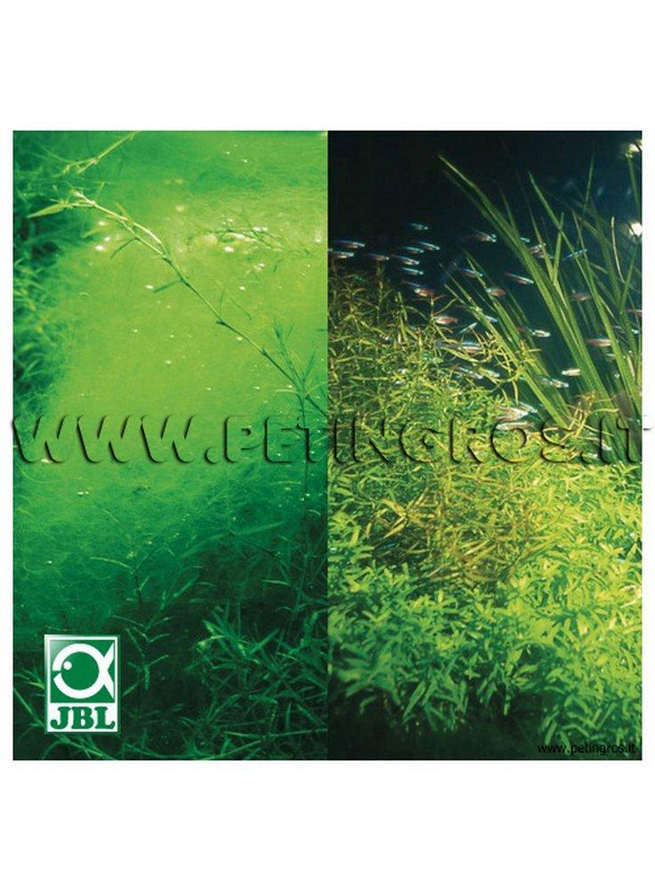 Jbl phosex rapid antifosfati per acquario dolce stop for Antialghe per acquario