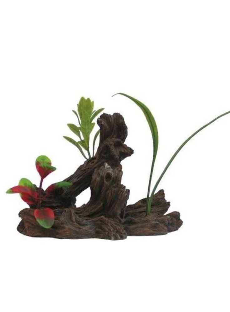 Pianta decorativa per acquari e terrari phytos lygnum 6