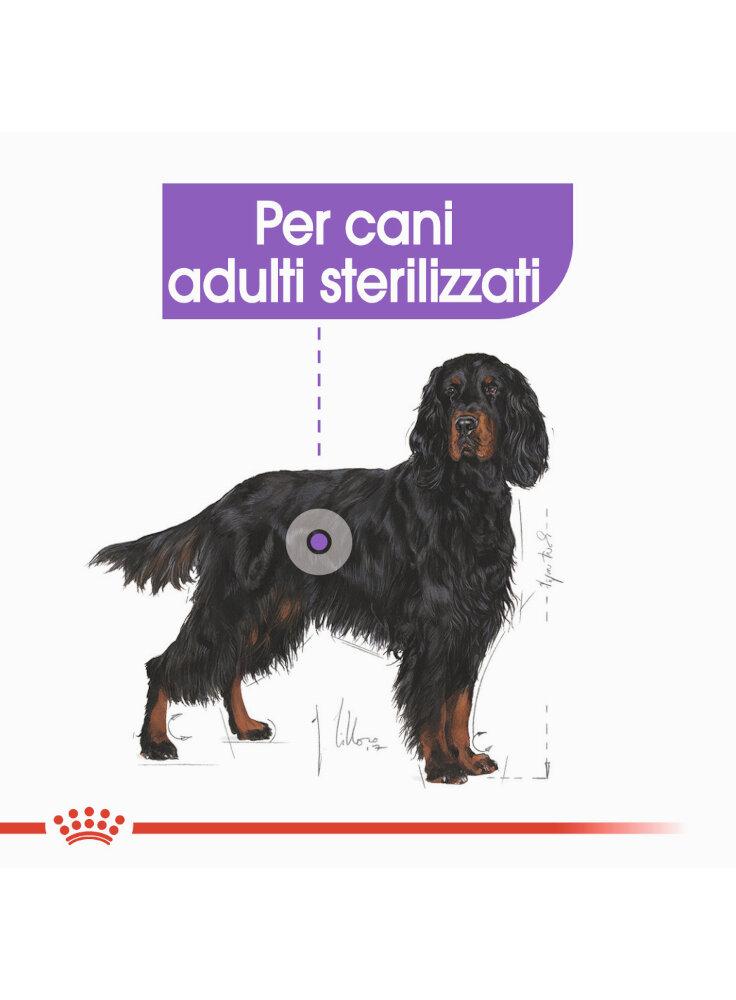 maxi-sterilised-cane-royal-canin-2