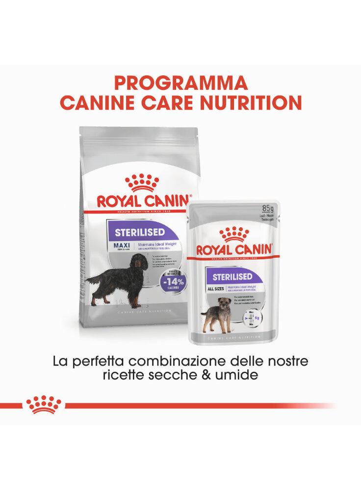 maxi-sterilised-cane-royal-canin-5