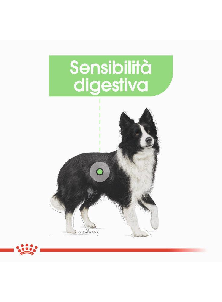 medium-digestive-care-cane-royal-canin-2