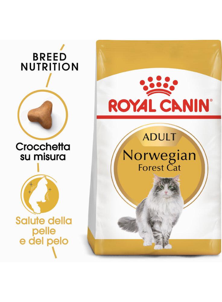 Norvegese delle foreste NORWEGIAN FOREST CAT Royal canin