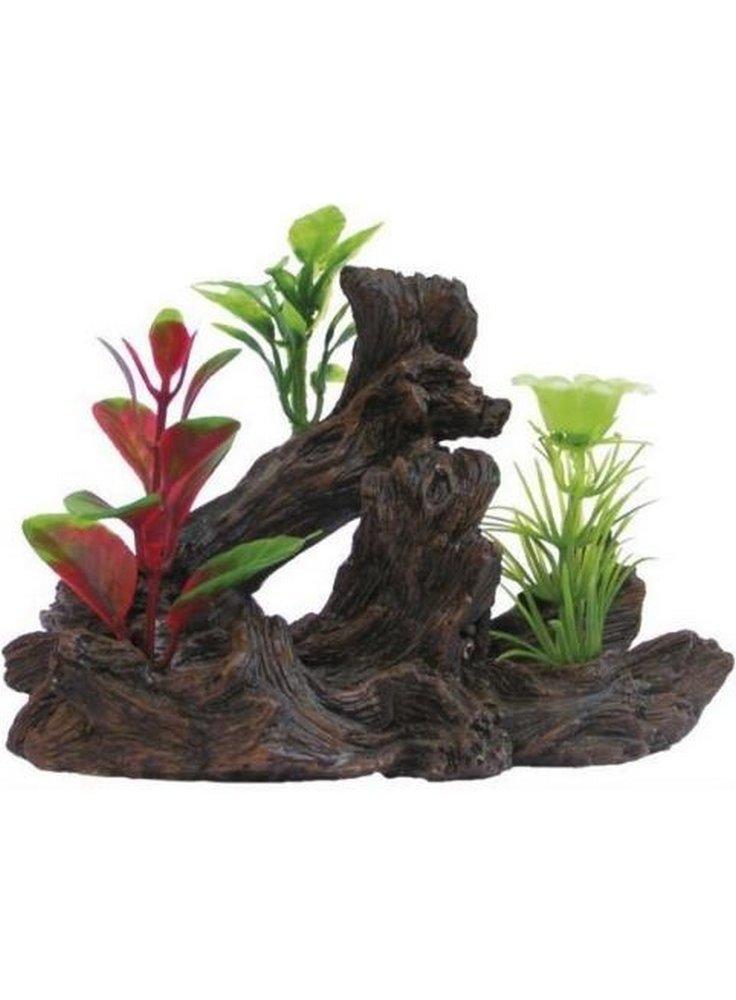 Pianta decorativa per acquari e terrari phytos lygnum 5