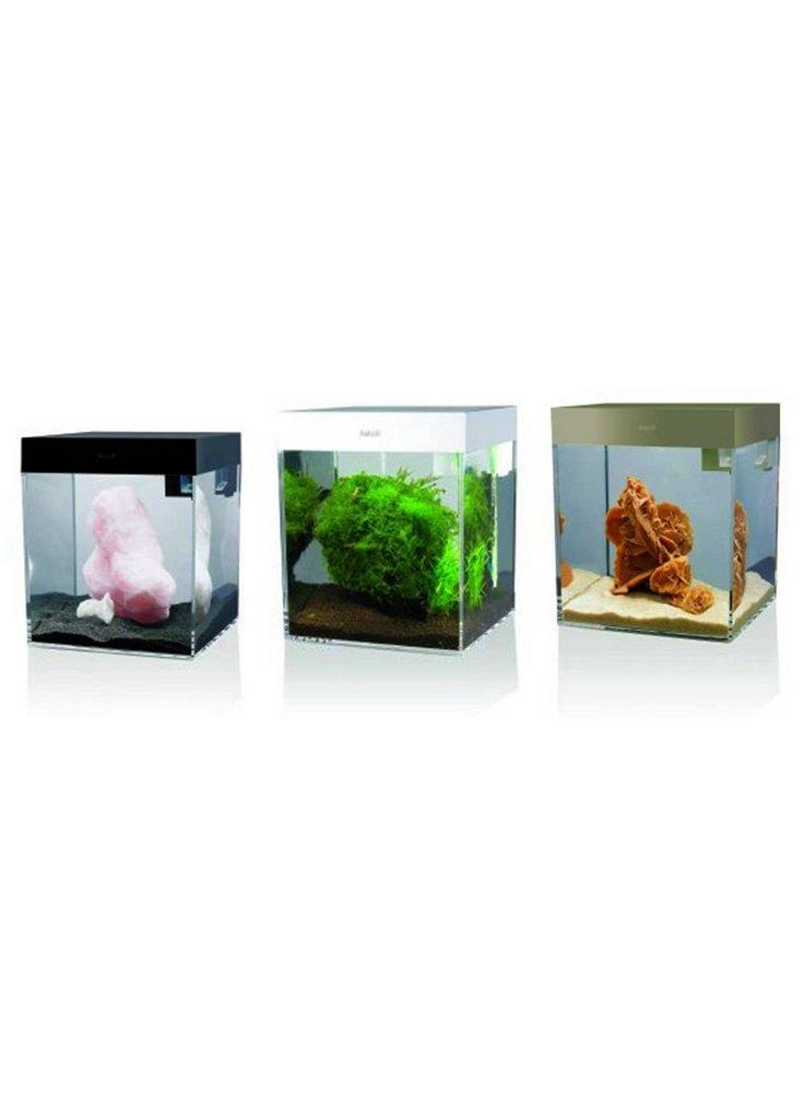 allestimento acquario 60 litri: ri allestimento vasca per biotipo