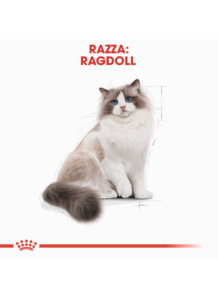 ragdoll-royal-canin-1