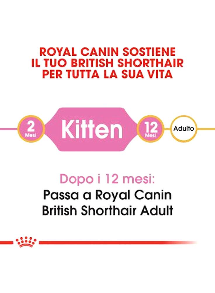 rc_fbn_kittenbritishshorthair_cv1_001_italy_italian__3