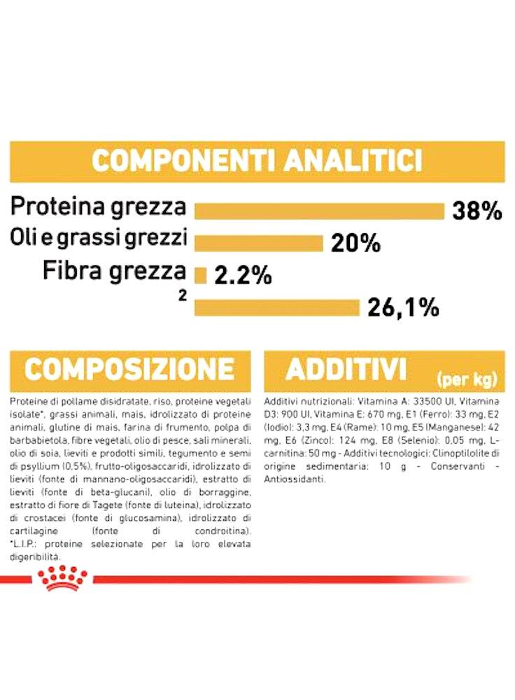 rc_fbn_kittenbritishshorthair_cv9_1_001_italy_italian__2
