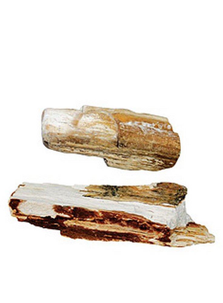 Legno fossile per acquario al pz