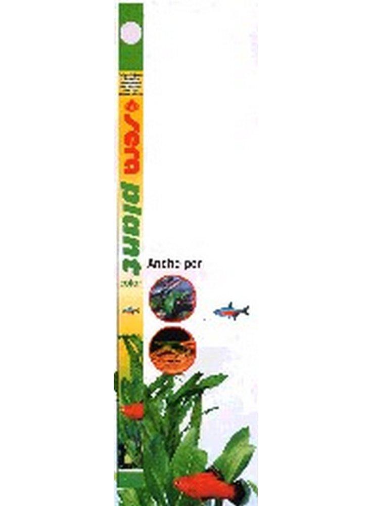 NEON SERA PLANT COLOR