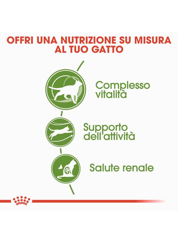 active-life-outdoor-7-gatto-royal-canin-2