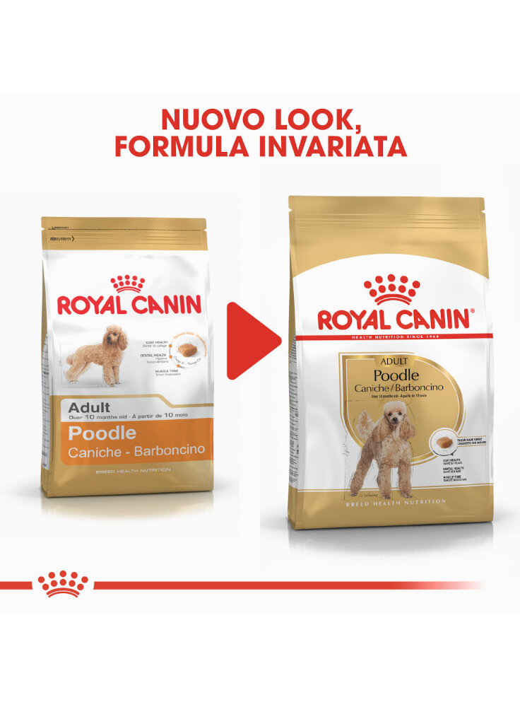 barboncino-poodle-adult-royal-canin-3