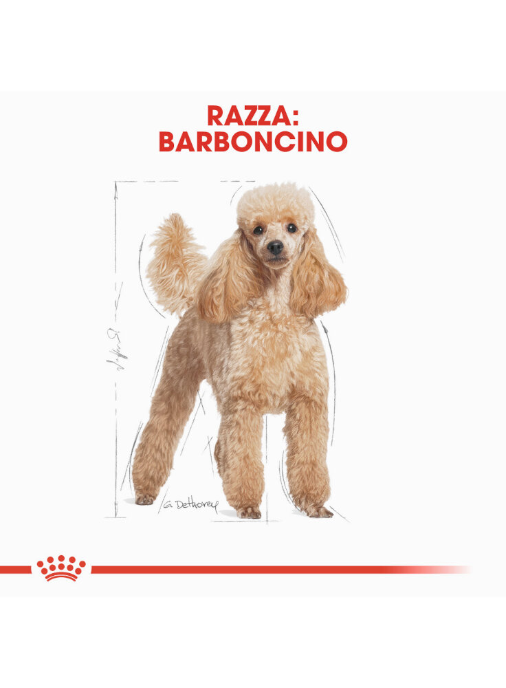 barboncino-poodle-royal-canin-500-gr