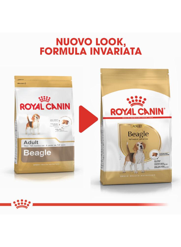 beagle-adult-royal-canin-2