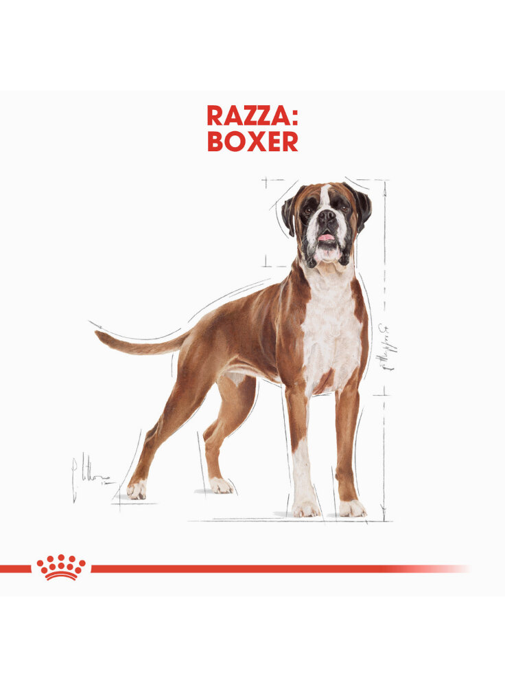 boxer-adult-royal-canin-1