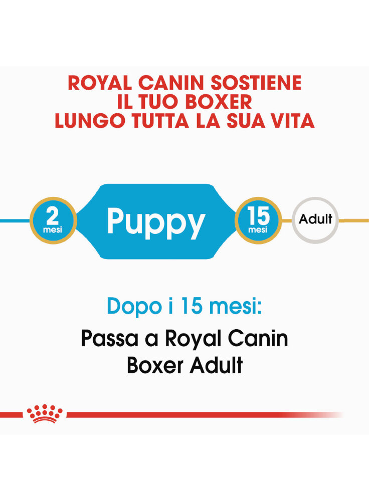 boxer-puppy-royal-canin-1